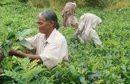 Covid-19 zal de fundamentele hervormingen in de opkomende en ontwikkelingslanden vertragen