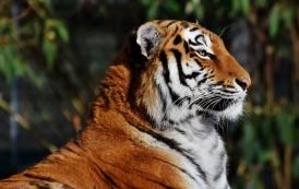 Het post-COVID-tijdperk: nemen de Aziatische tijgers opnieuw een voortrekkersrol?