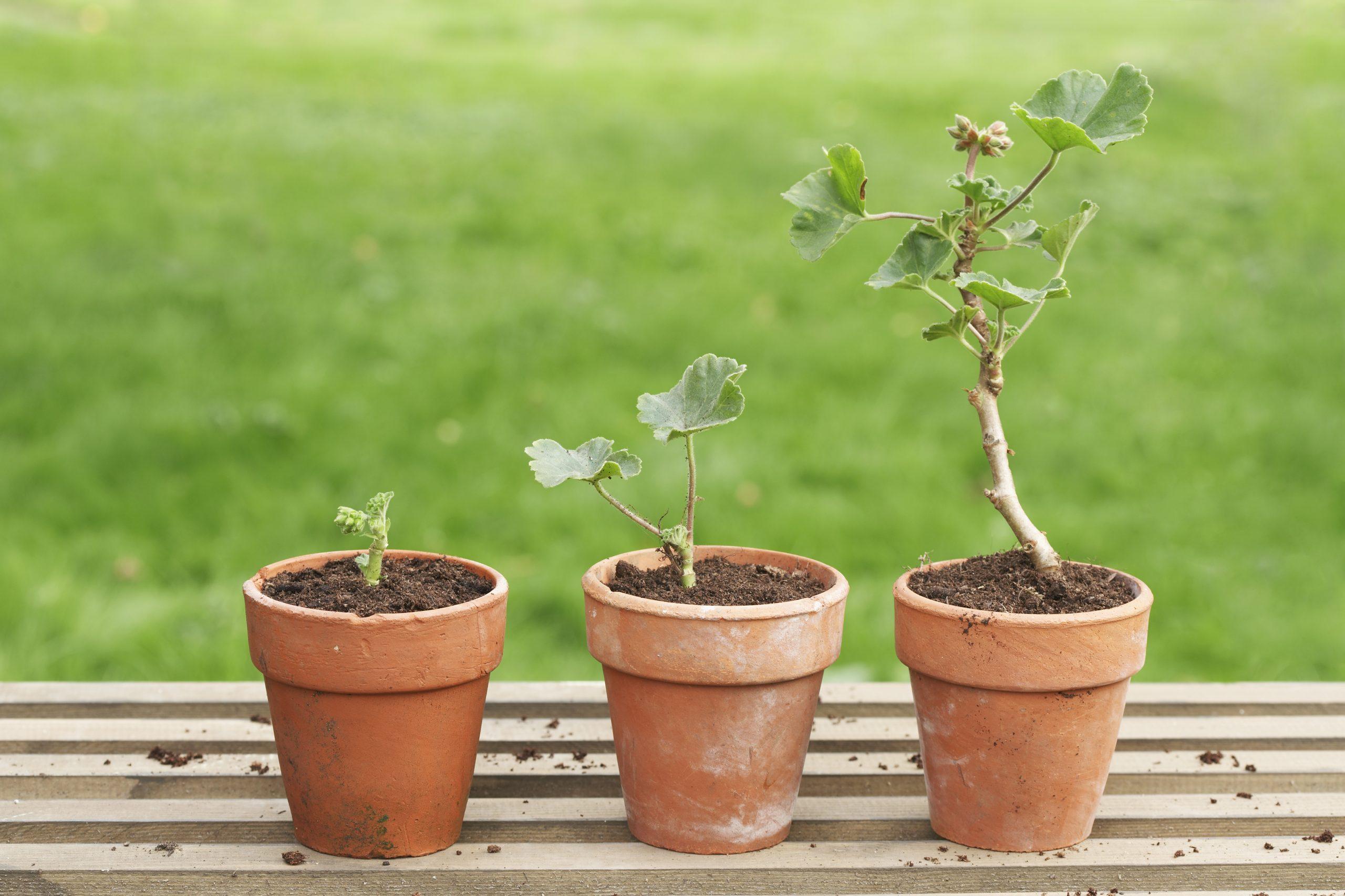 Let op de (kleiner wordende) kloof tussen waarde- en groeiaandelen
